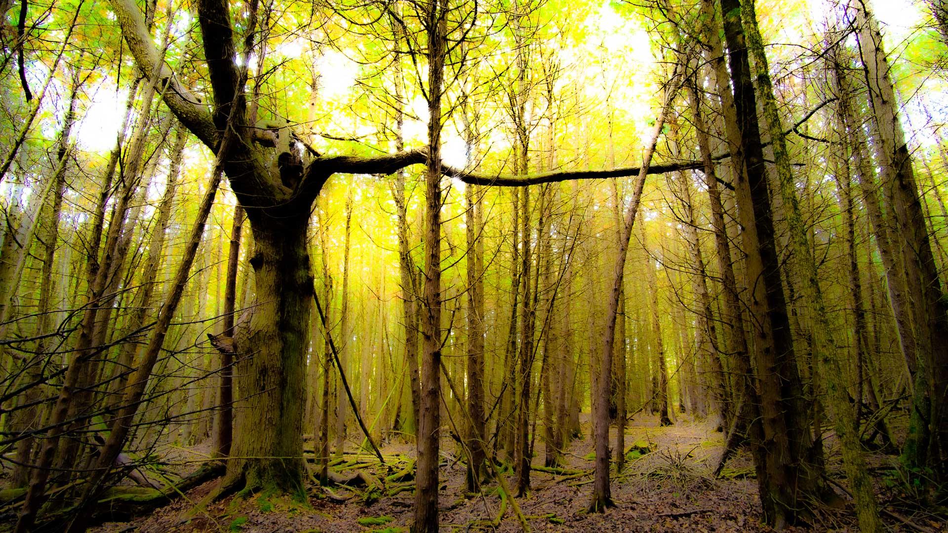 Trees on Acid